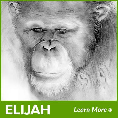 elijah-new