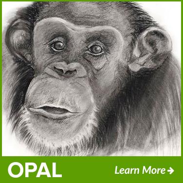 opal-new