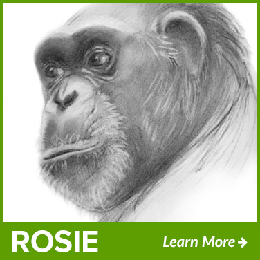 rosie-new