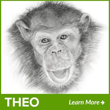 theo-new